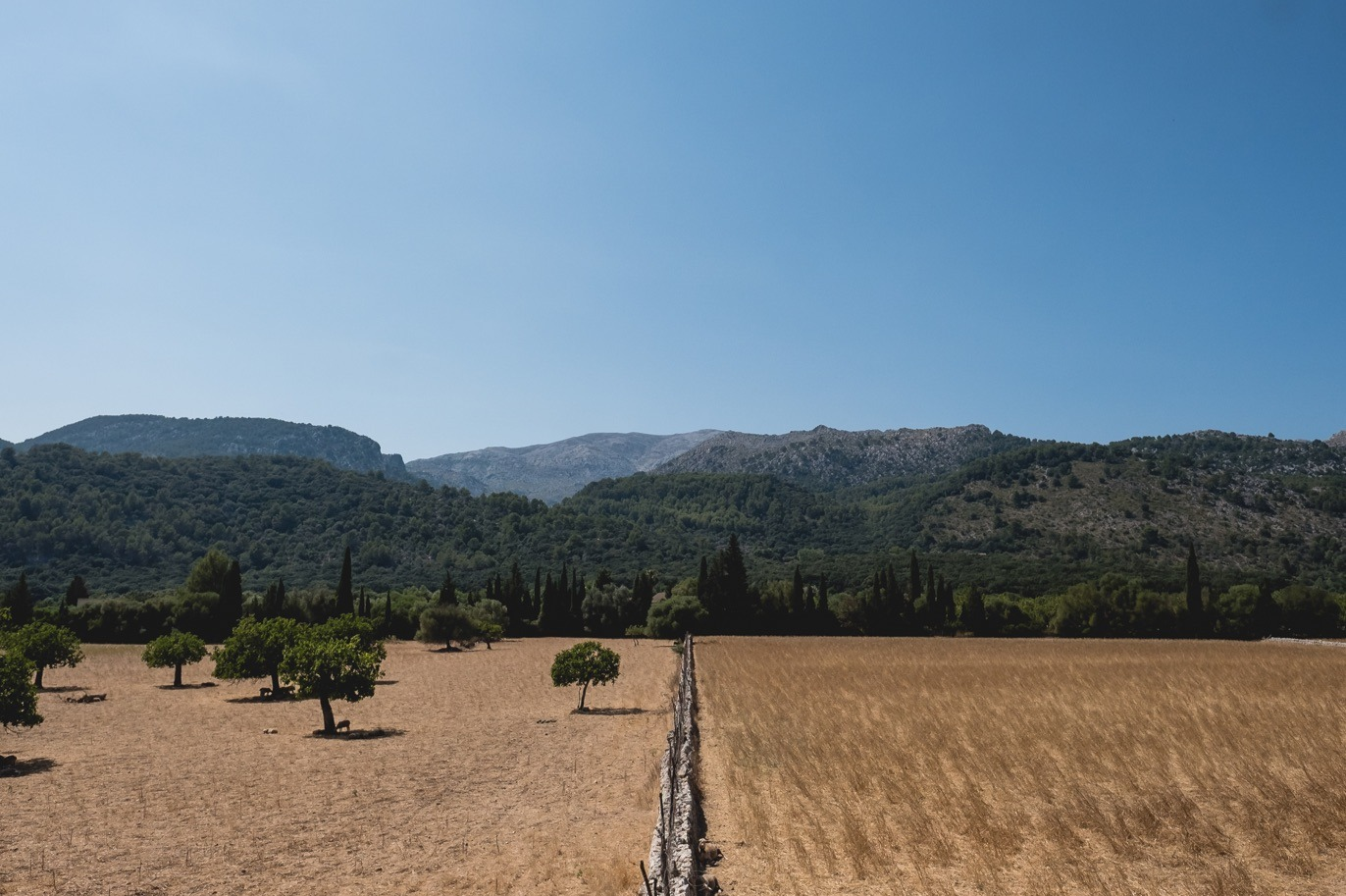 agritourism for weddings in mallorca